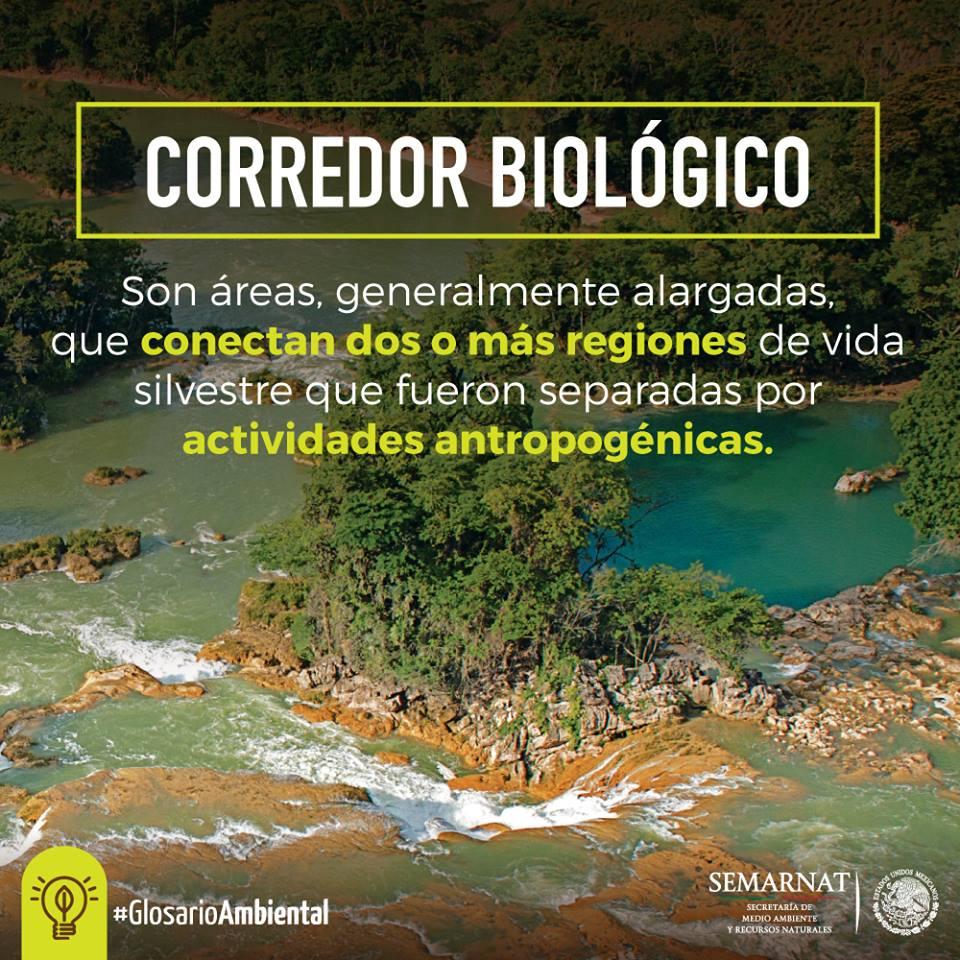Glosario ambiental: corredores biológicos, pasadizos de la naturaleza.