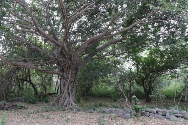Gobierno del Estado creará un Jardín Etnobiológico en La Campana